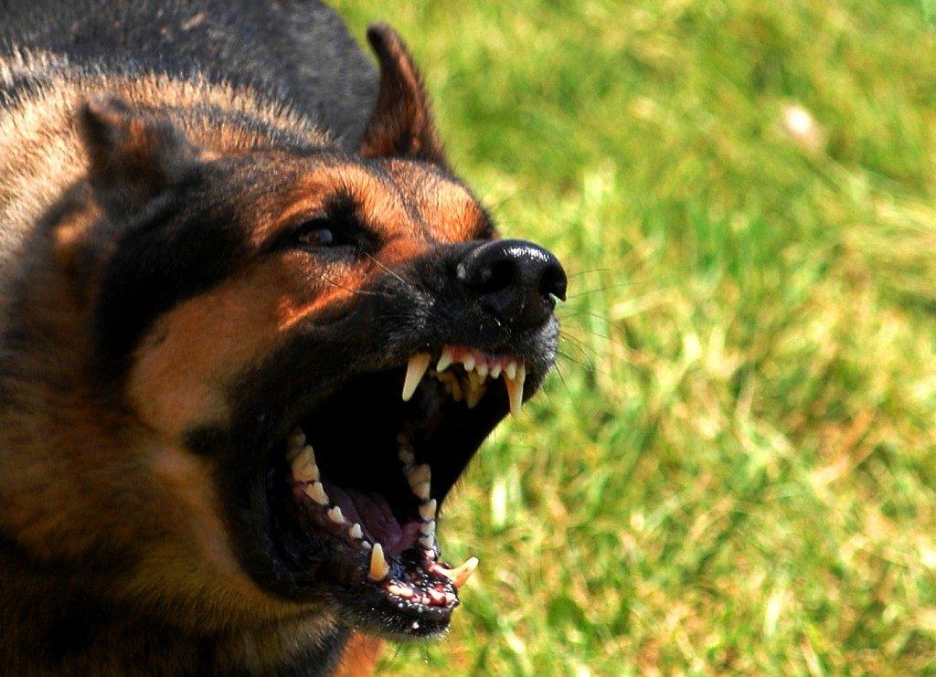 perro rabioso sistema 1 subconsciente